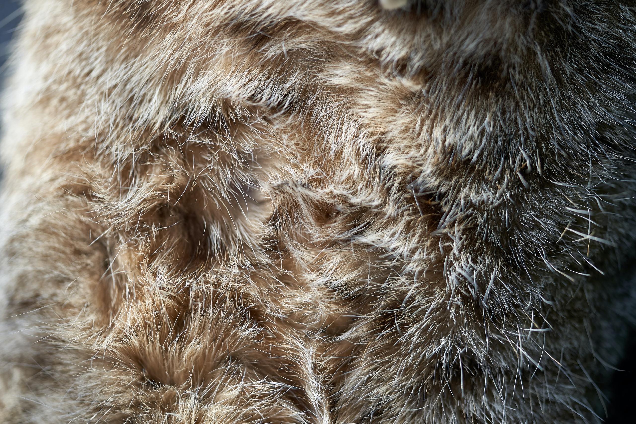 Møbelpolstring og ombetrækning med pels